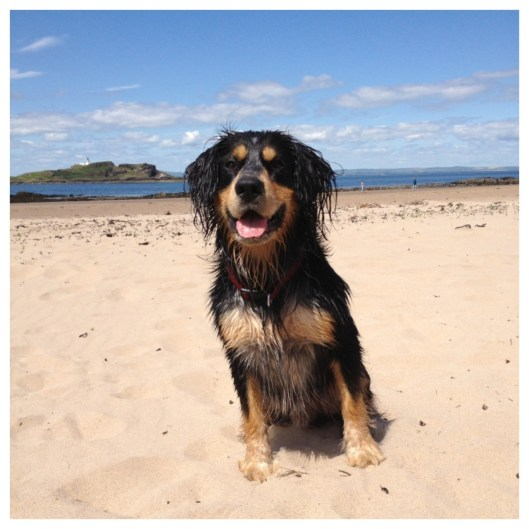 Yellowcraigs Beach, girlbogdog